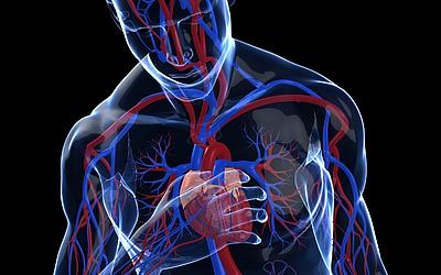 Изображение 5 - Марихуановая зависимость - клиника Веримед