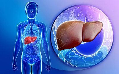Изображение 2 - Сколько в организме держится алкоголь - клиника Веримед