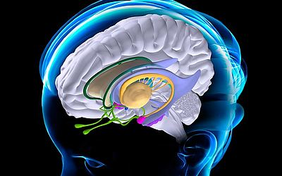 Изображение 3 - Центр удовольствия в мозге - клиника Веримед