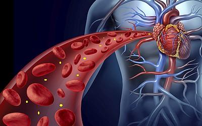 Метаболические процессы организма - клиника Веримед
