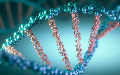 Генетический фактор развития болезни - Веримед