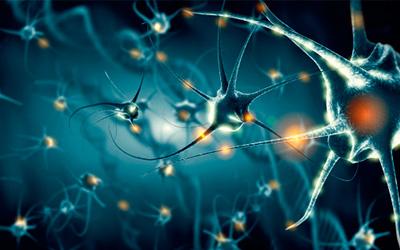 Этанол разрушает нейронные связи - Веримед