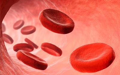 Кровеносные сосуды - Веримед