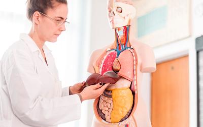 Лечение внутренних органов – Веримед