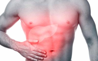 Пусковым фактором развития фиброза печени является токсическое действие алкоголя – Веримед