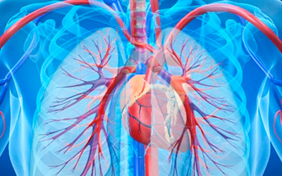 Легочная гипертензия и пороки клапанов сердца - Веримед