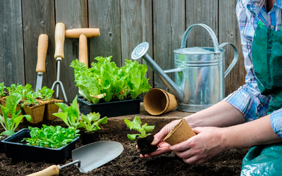Работа в саду - Веримед
