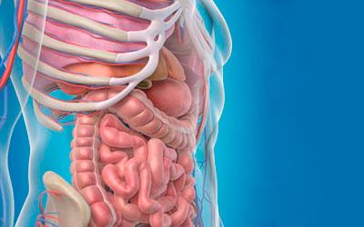 Алкоголь «бьет» по всем внутренним органам - Веримед