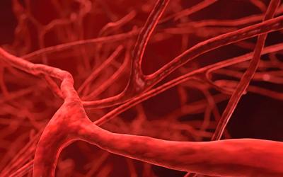 Кровеносные сосуды плаценты спазмируются - Веримед