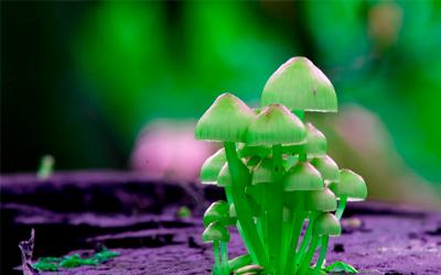 Передозировка псилоцибиновыми грибами - Веримед