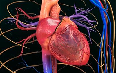 Как «жижа» влияет на организм - Веримед