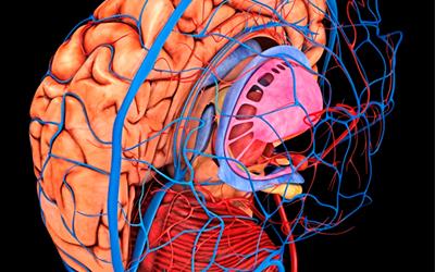 Нарушение метаболических процессов в головном мозге - Веримед