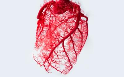 Сосуды и система крови - Веримед