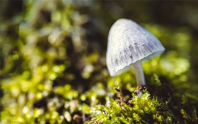 Стоит ли остерегаться грибных галлюциногенов - Веримед